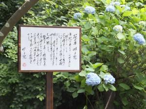 花の寺 明月院はね…