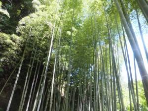 竹林浴でリフレッシュ