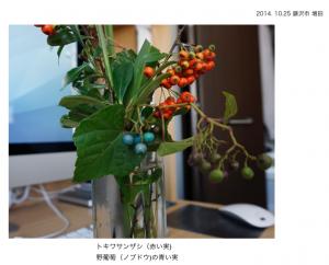 1.ノブドウが奇麗