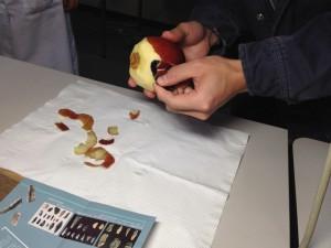 150309石器でリンゴをむくsmall2