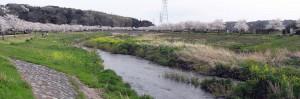 2010Apr_sakura